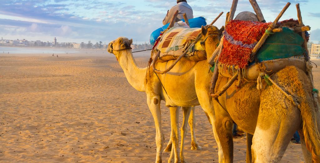 Don't miss a traditional camel ride!