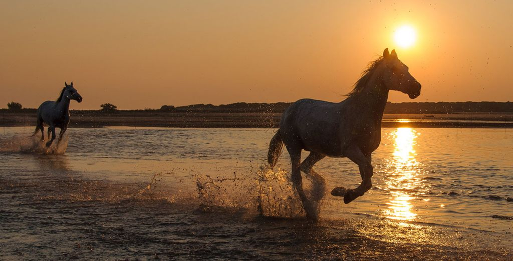 Camargue is all about being at one with nature!