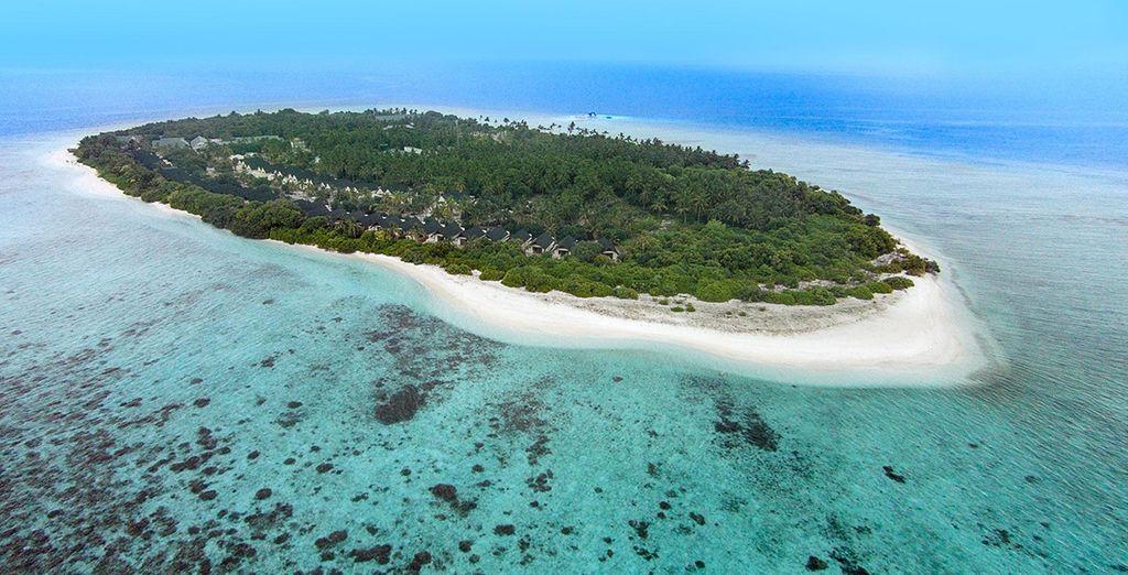 On the Maldives island of Furaveri