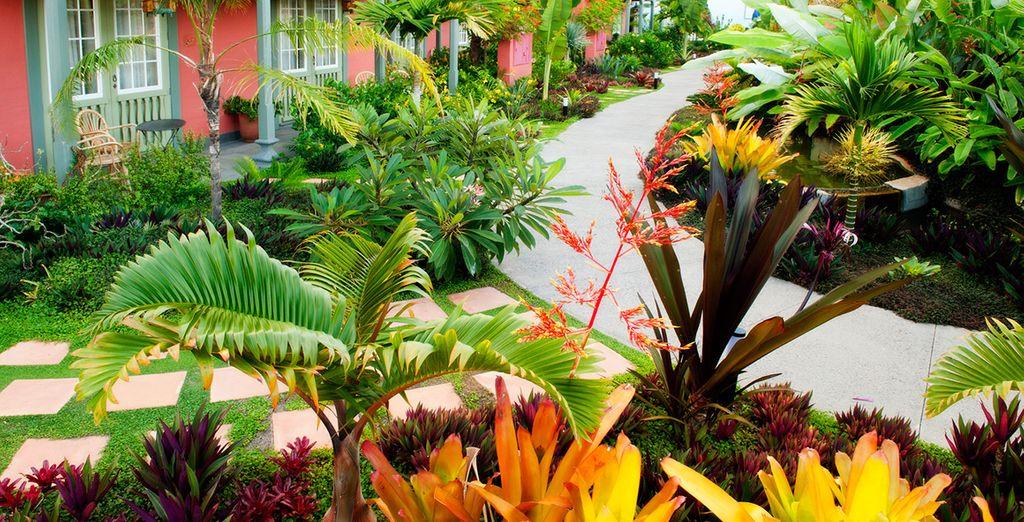 The resort is set amongst lush gardens