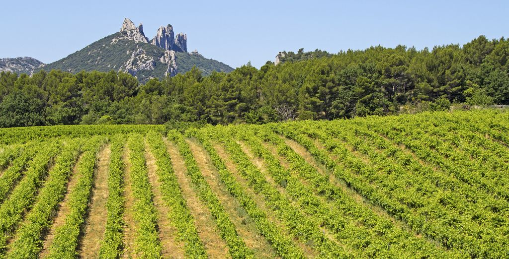 Sample the fruits of Gigondas Vineyards