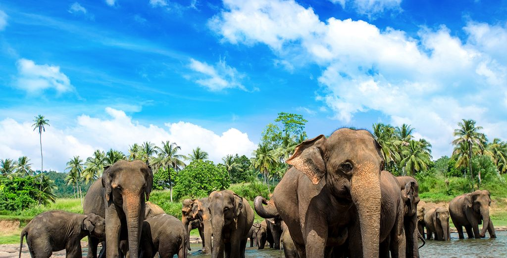 Holidays to Sri Lanka : discover the wildlife