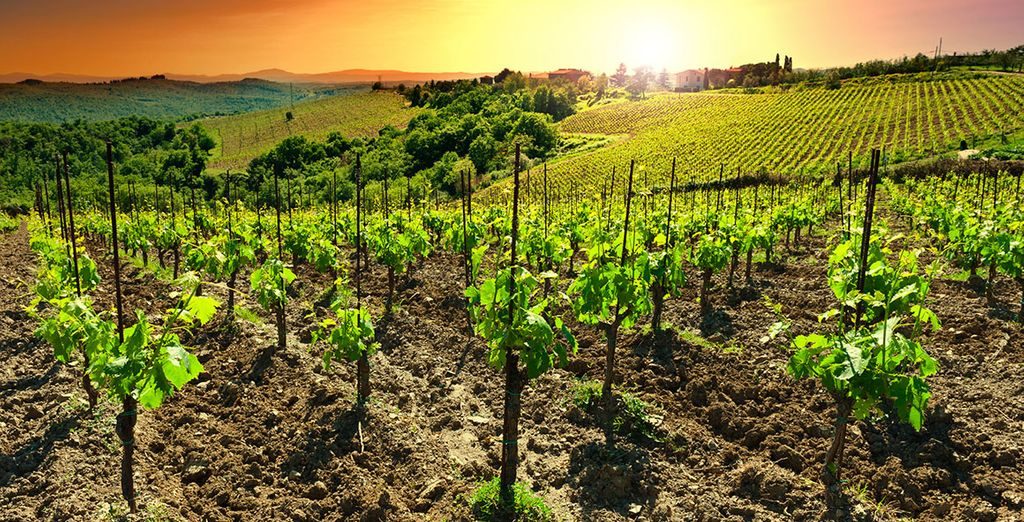 The local vineyards...