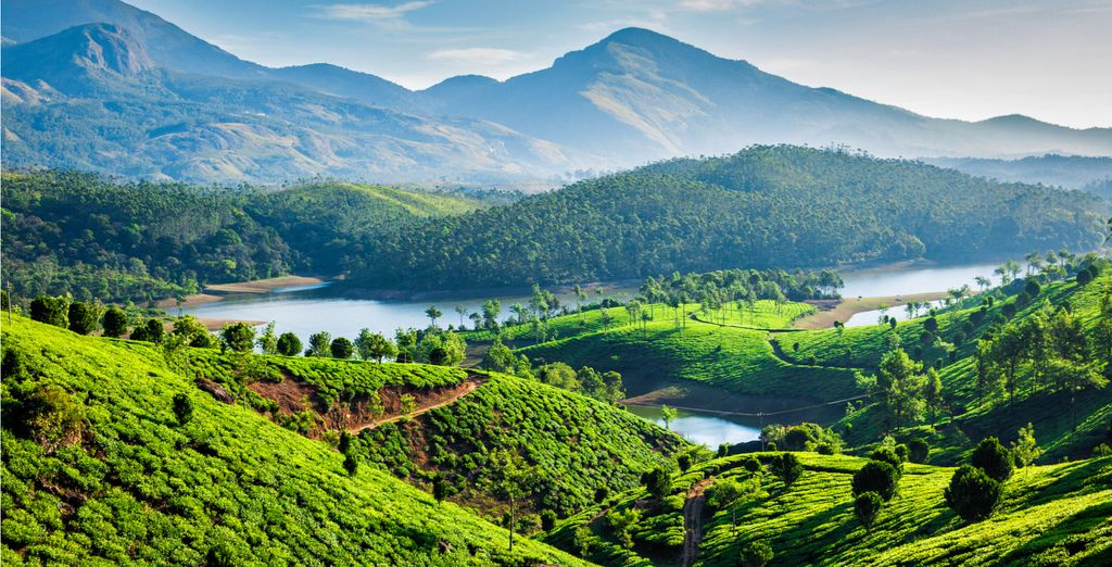 Then spend a night in the breathtaking tea plantations of Munnar