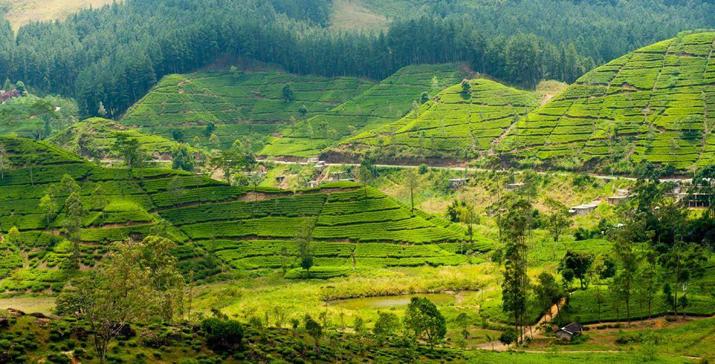 Explore its lush, green scenery