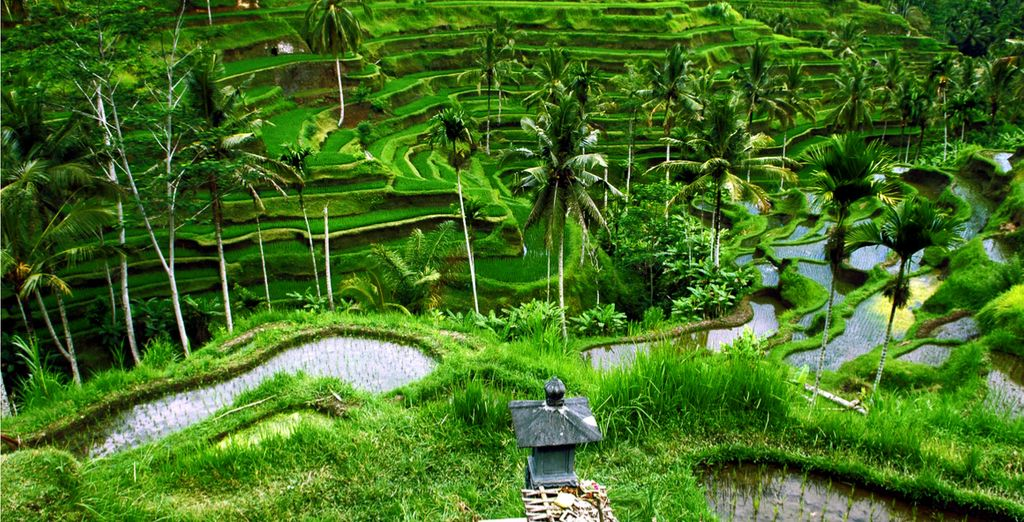 Bali Travel Guide : Tegalalang Rice Fields