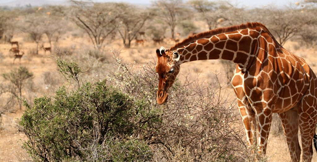Or choose offer two and ALSO visit the Samburu National Reserve