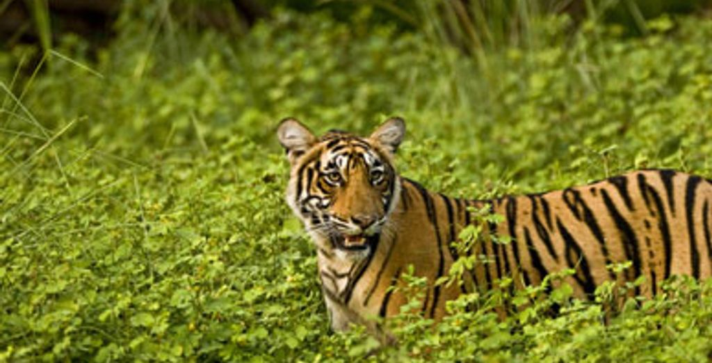 - Tigers, Forts and Palaces Private Tour - India Various