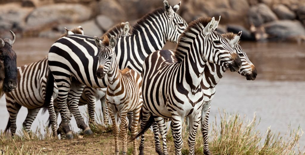 Choose from two offers. In offer one you will visit the Masai Mara National Reserve