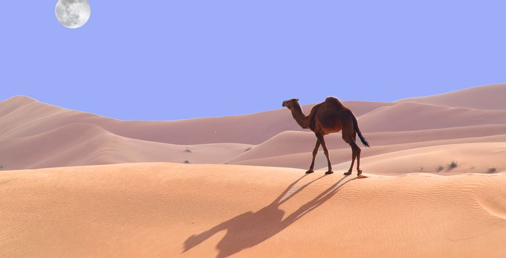 Head into the desert...