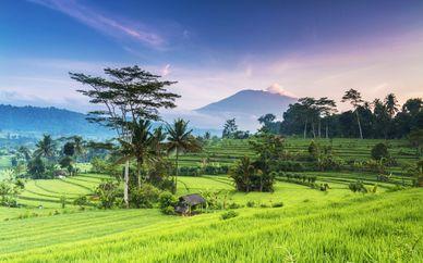 Circuit privatif Trésors de Bali