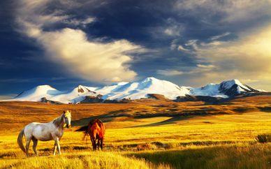 Circuit Tour de Mongolie en 8 nuits et pré-extension possible à Pékin
