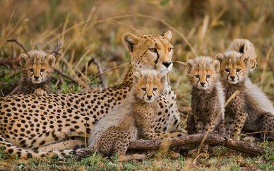 Afrika Pearl And Spa 4* & Safari