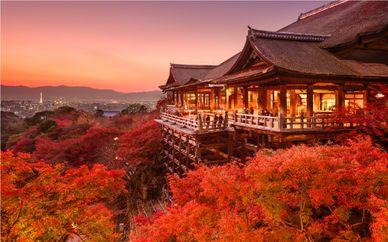 Tour in Giappone di 12 o 14 notti