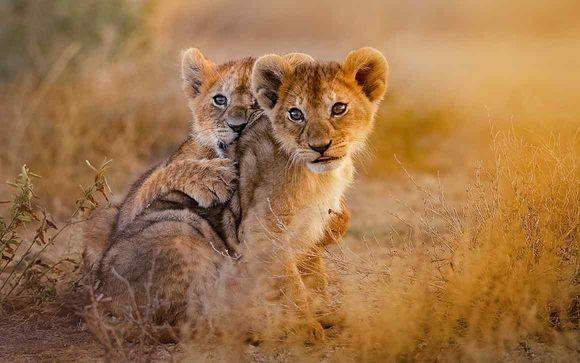 Uw optionele safari in 3, 4 of 5 nachten