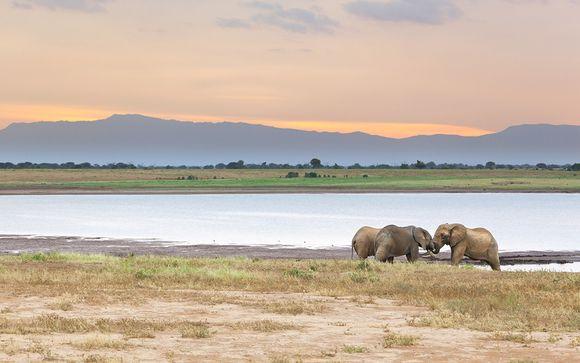 1 nacht safari: Tsavo East National Park