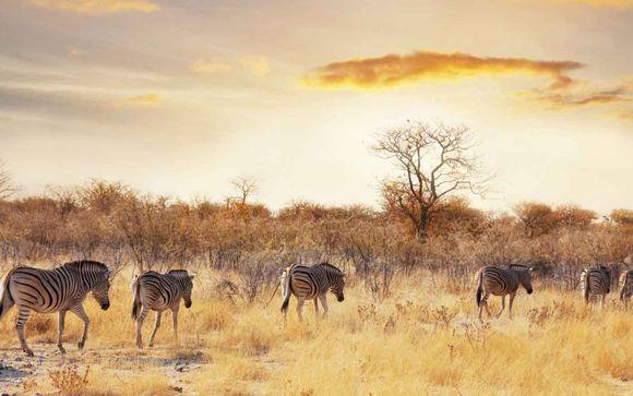 Bei 12 Nächten: 4-tägige Safari