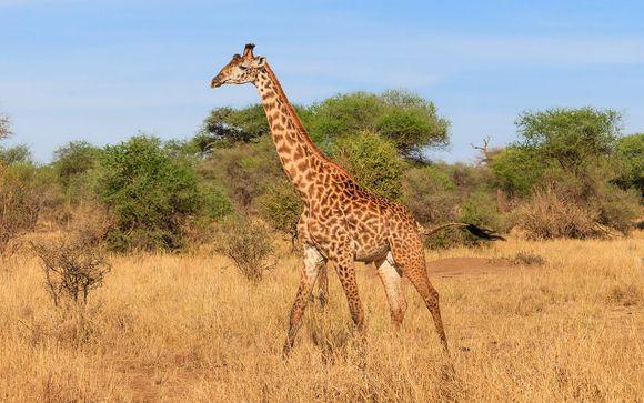Ihr Programm auf der Safari