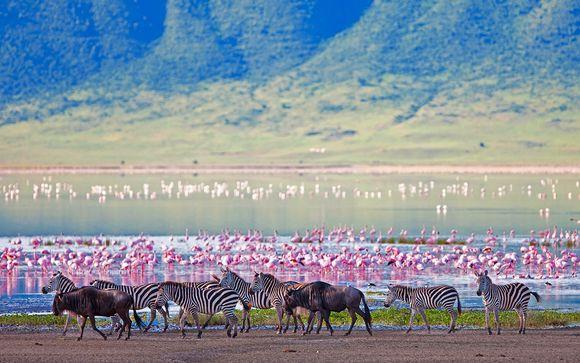 Optionale Tansania-Safari