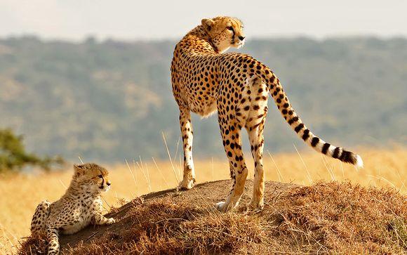 Safari Shimba Hills / Ngutuni / Taita Hills
