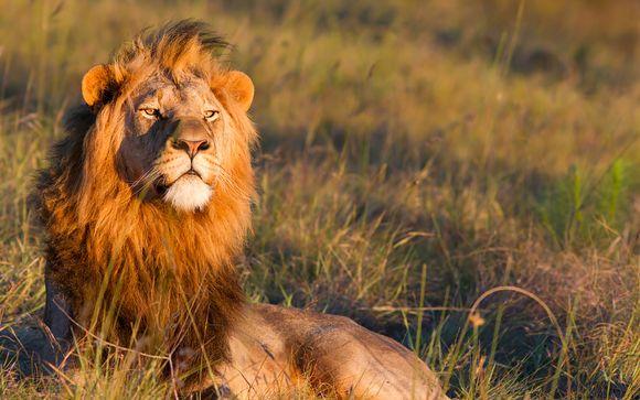 Ihre Safaris