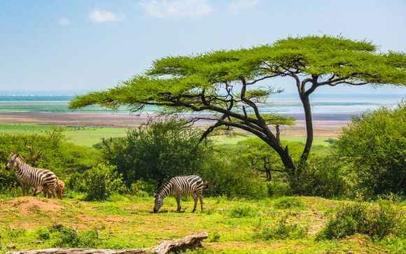 Ihre Safari