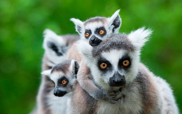 Madagascar, la isla continente