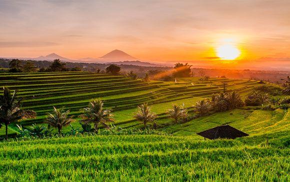 Bali Esencial