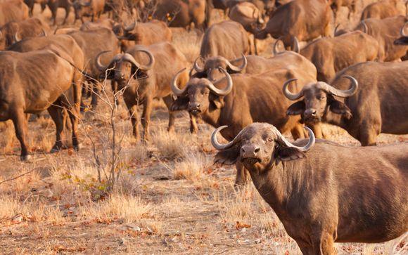 Itinerario en Sudáfrica