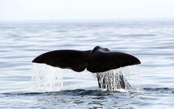 Noruega Oslo - Experencia nadando con orcas y avistamiento de ballenas desde 1.792,00 €