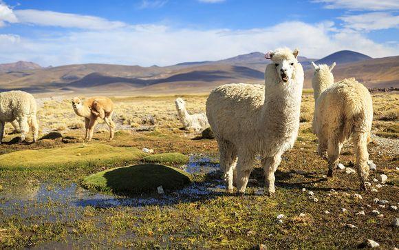 Rencontres Pérou Lima