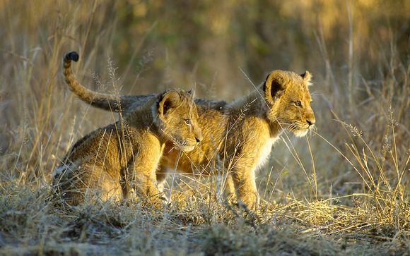 Safari authentique 8 nuits, avec ou sans extension à Victoria Falls