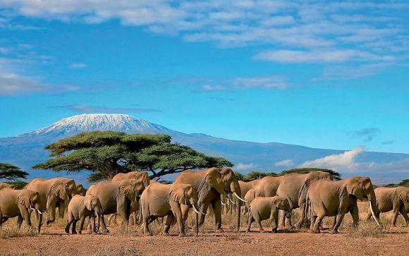 Zoom sur vos safaris Luxe