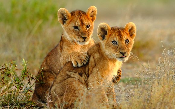 Zoom sur votre safari au parc Masai Mara