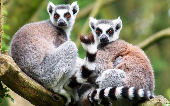 Rendez-vous à... Madagascar
