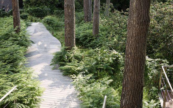 Rendez-vous... à la Hulpe, dans la forêt de Soignes