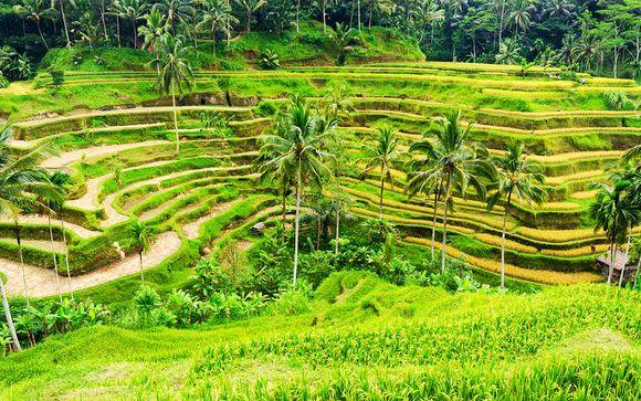 A Bali