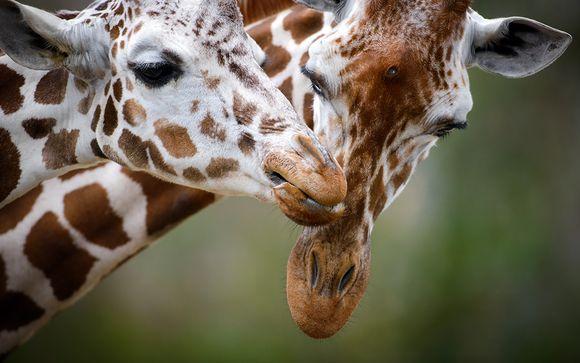 Votre safari Ngutuni en 2 jours/1 nuit
