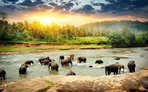 Sri Lanka Galle - Circuit découverte du Sri Lanka et séjour balnéaire à partir de 1 120,00 € (1120.00 EUR€)