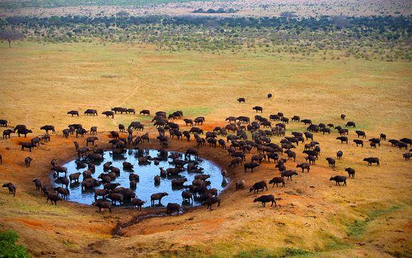 I programmi dei safari
