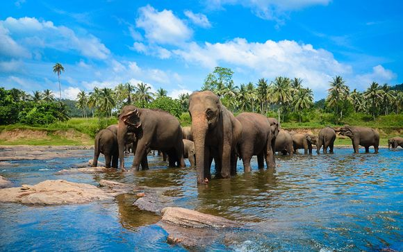 Tour Sri Lanka 6 notti