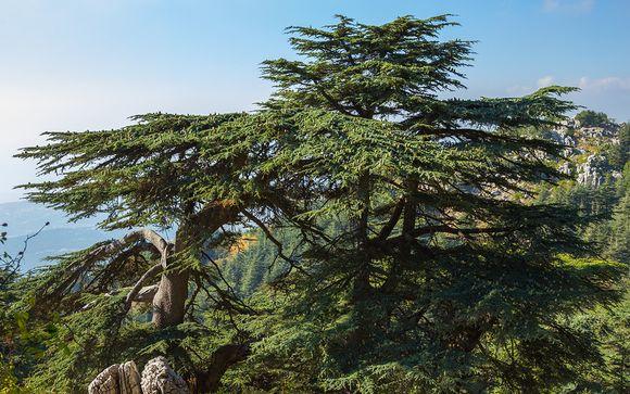 Alla scoperta del Libano