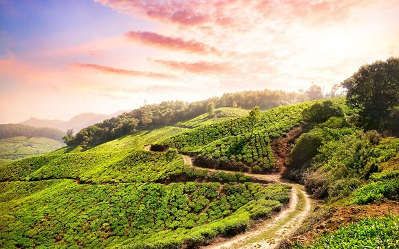 Tour del Kerala - itinerario