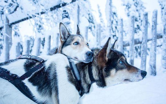 Lapponia estrema in spedizione con cani husky da slitta