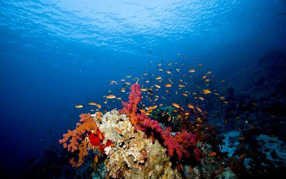 Alla scoperta del Mar Rosso