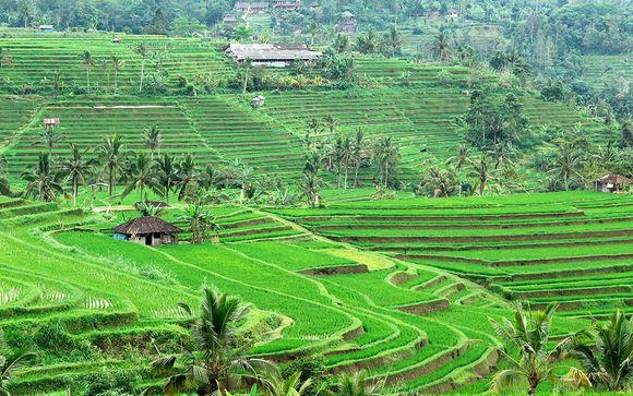 Estensione a Bali