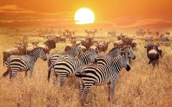 Itinerario - Kifaru Safari