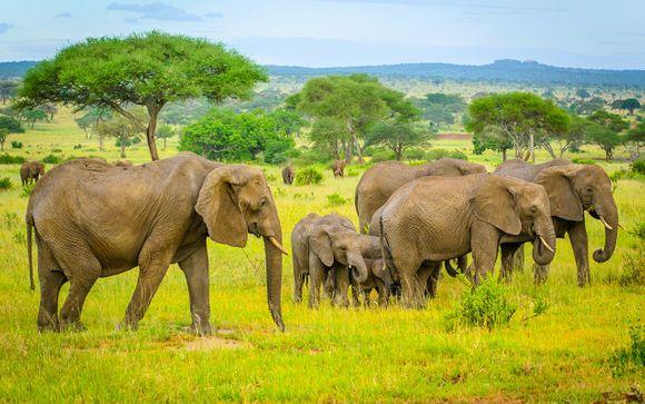 Uw safari reisprogramma