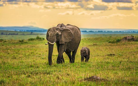 Safari Tsavo East- 2 dagen / 1 nacht