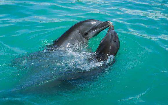 Safari optie: dolfijnenexcursie